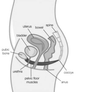 pf diagram